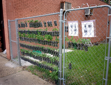 vertical garden made from soda bottle