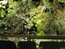Plants on Walls in bar