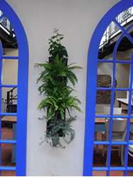 Plants on Walls in lounge